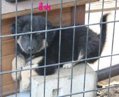 Puppy_5352