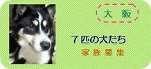 Osaka7dogs2