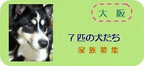 Osaka7dogs2_1